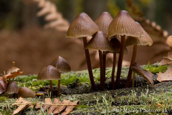 New Forest Fungi
