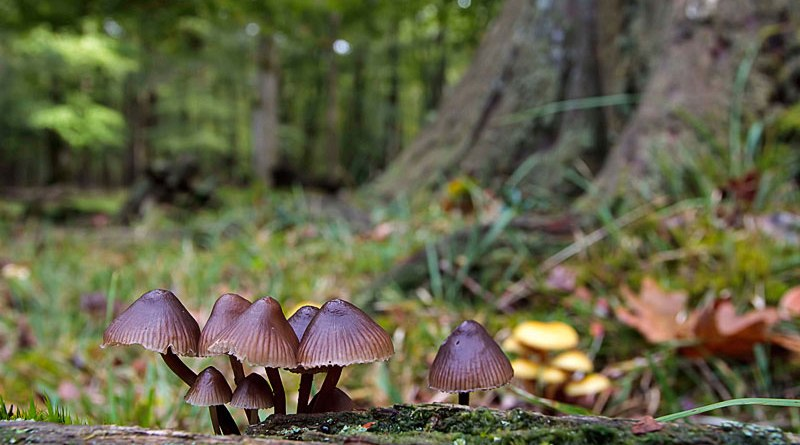 Fungi Landscape