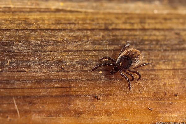 Tick at x3 Magnification.