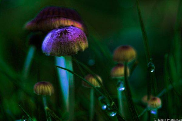 Glowing Fungi in the Grass