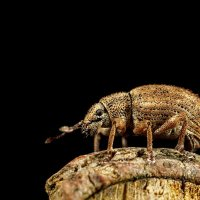 Weevil on log