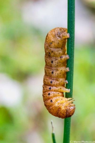 Catterpillar.