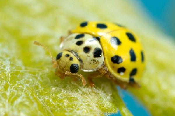22 Spot Ladybird by Gordon Zammit (3)
