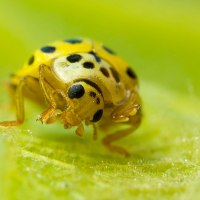 22 Spot Ladybird by Gordon Zammit