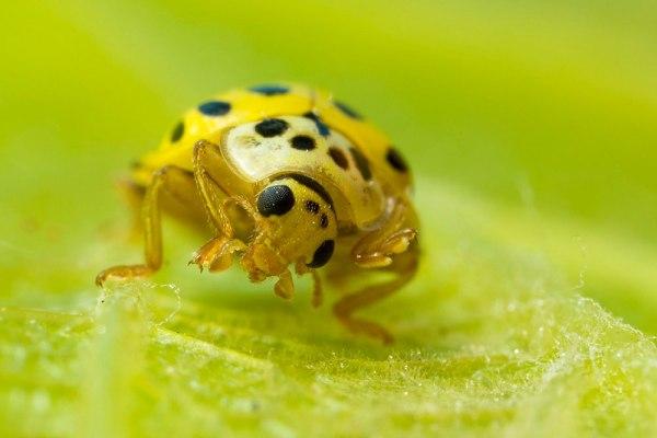 22 Spot Ladybird by Gordon Zammit (5)