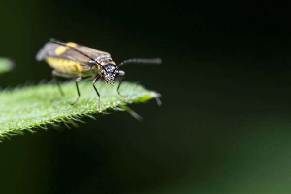 Angry Moth