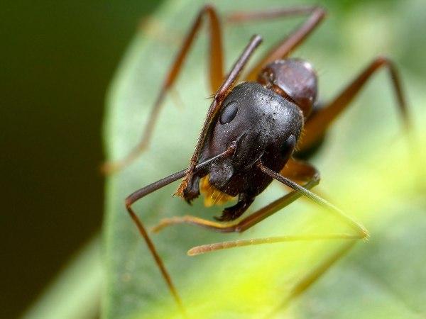 Ant 1 by Gordon Zammit