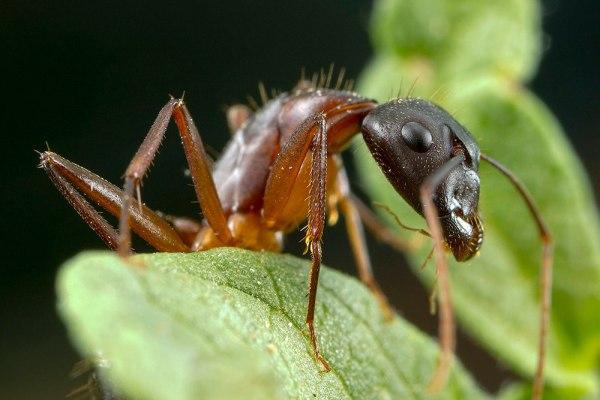 Ant 3 by Gordon Zammit
