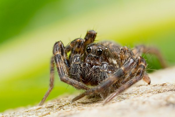 3 Image Stack of Spider