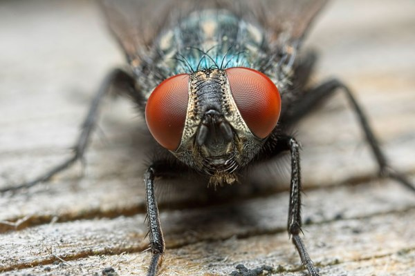 Fly Eyes - First MPE shot with the 760D