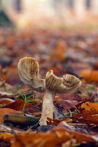 New Forest Fungi (2)