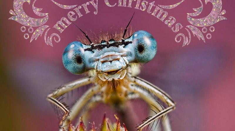 Merry Macro Christmas