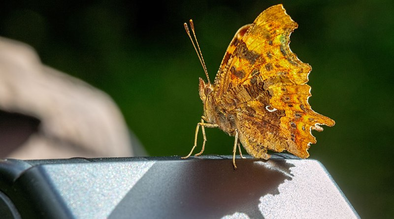 Comma on Pete's flashgun
