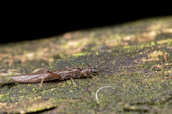 Long Bug (2)