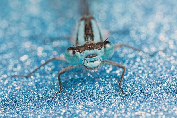 Glittery Blue II