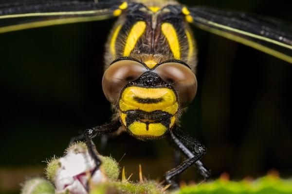 The Eyes of the Golden Ringed Monster