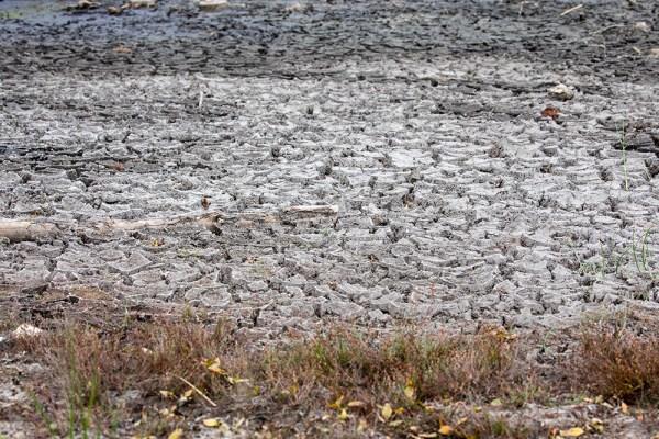 The cracked mud of Dunyeats Heath pond