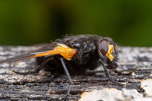 Fly on Bench