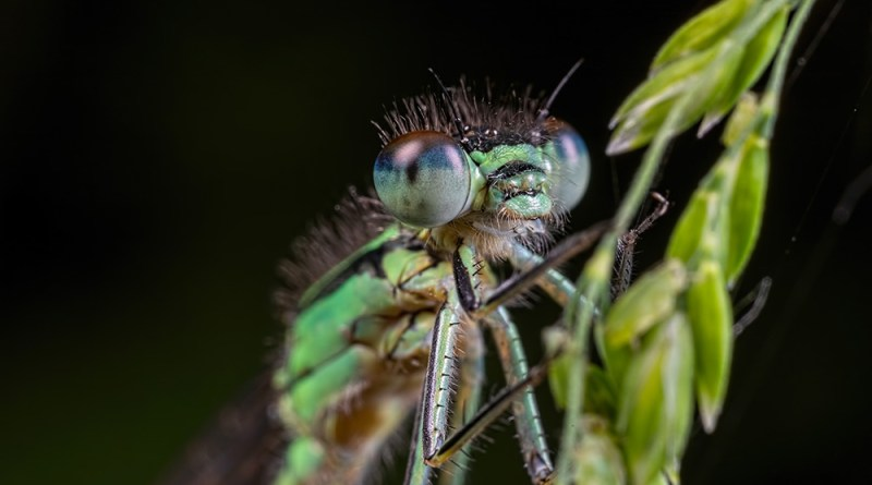 Green n Blue Eyes