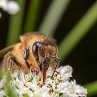 Beetles n Bees