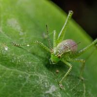 Crickets, Bugs, Butterflies and an Alien.