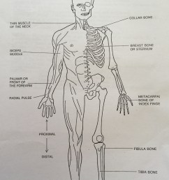 diagrams of bones and muscles names and discretions [ 2291 x 3258 Pixel ]