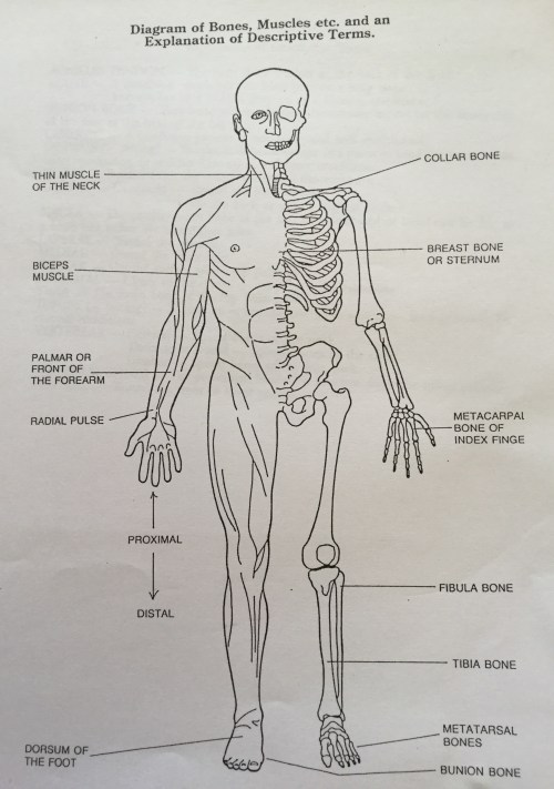 small resolution of diagrams of bones and muscles names and discretions