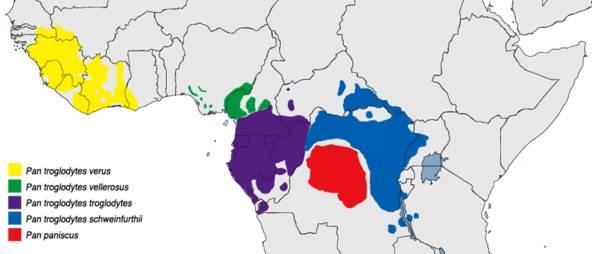 Chimpanzee Range Map