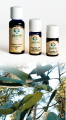 Eucalipto Radiata - Olio Essenziale 30 ml (1400-30)