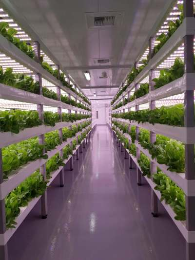 automated vertical farming