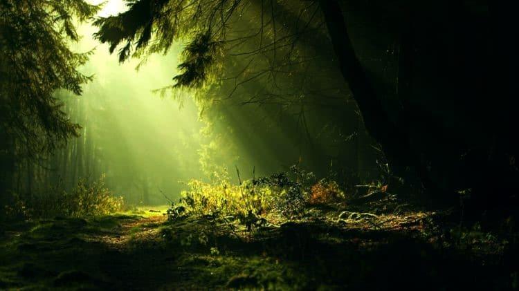 tes de la forêt