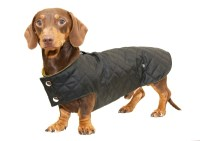 Dog Coats For Dachshunds - Goldenacresdogs.com