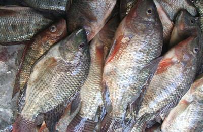 Se lancer dans la pisciculture à Madagascar