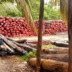 À Madagascar, les richesses naturelles ne profitent pas à la population