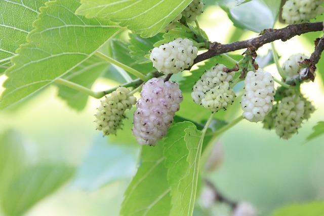 Confinement suite à covid-19, un fruit pour lutter contre le surpoids