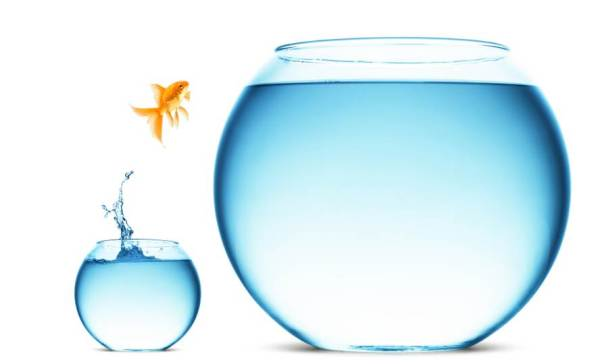fish-jumping-comfort-zone
