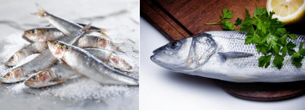 Εποχικότητα Ψαριών