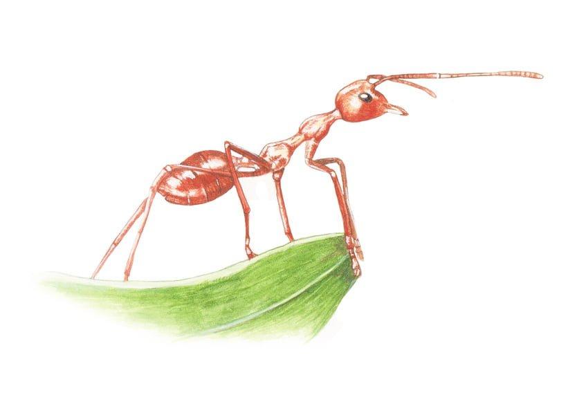 Μυρμήγκια στην κουζίνα: φυσικοί τρόποι να απαλλαγείς