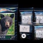 black bear 01 small panel peyote seed bead pattern pdf or kit diy maddiethekat designs 2