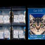 cat 10 small panel peyote seed bead pattern pdf or kit diy maddiethekat designs 2