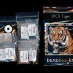 wild cat series tiger larger panel peyote seed bead pattern pdf or kit diy maddiethekat designs 2