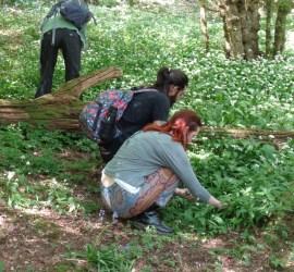 traditional herbal remedies workshops | Kent