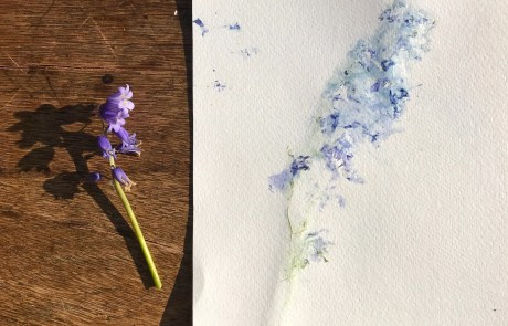 botanical art bluebells