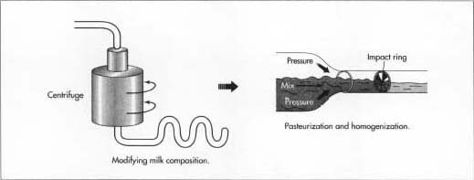 When the milk arrives at the plant, its composition is modified before it is used to make yogurt. This standardization process typically involves reducing the fat content and increasing the total solids. Once modification occurs, it is pasteurized to kill bacteria and homogenized to consistently disperse fat molecules.