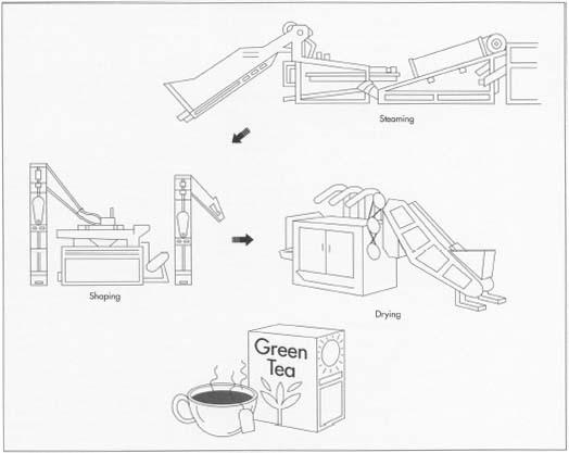 Green tea manufacturing process pdf