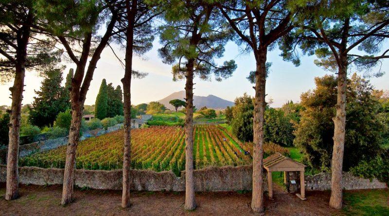Non solo viti nei vigneti dell'antica Pompei: accertata la presenza di legumi e alberi da frutto