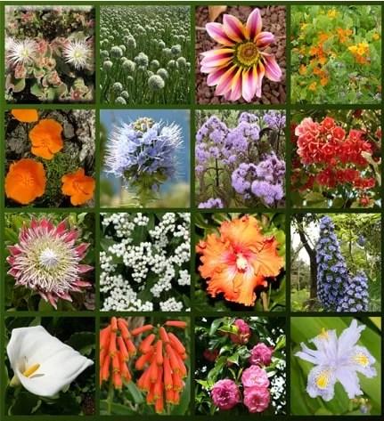 flowersofmadeira