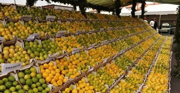 Madeira Lemon Festival 2014