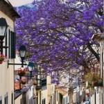 Es ist Frühling in Funchal auf Madeira