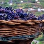 Madeira Weinfestival